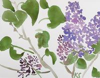© Kate Schelter LLC 2018 | Lilacs 1 by Kate Schelter