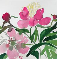 © Kate Schelter LLC 2019 | Peony 9 Cape Cod Garden 2017 by Kate Schelter